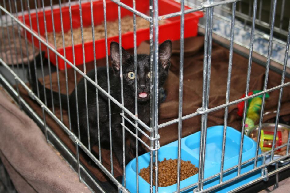 canicule vous pouvez sauver les chats de la spa de la. Black Bedroom Furniture Sets. Home Design Ideas