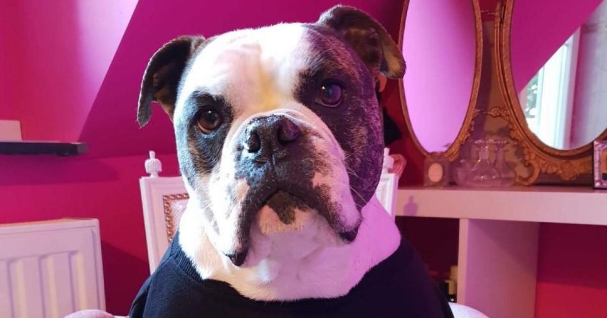 Isis et Lucky ont trouvé une nouvelle famille: «Ce sont des chiens formidables»
