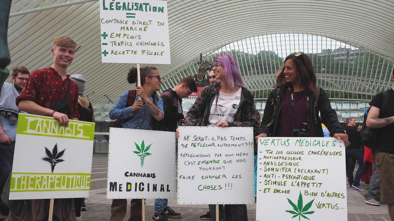 Liège – Judiciaire : Justice clémente pour le club des cultivateurs de cannabis: deux Soumagnards avaient