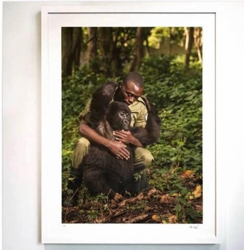 Congo : deux gorilles posent pour un selfie avec un garde forestier
