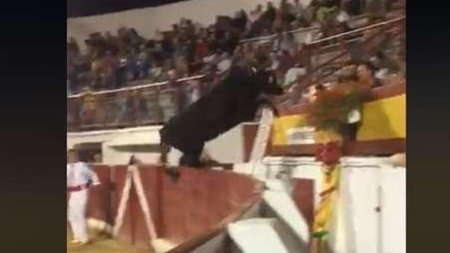 Une vachette saute dans le public et fait 4 blessés — Landes