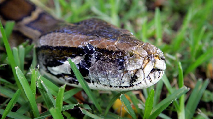 Il s'agissait d'un serpent de petite taille.