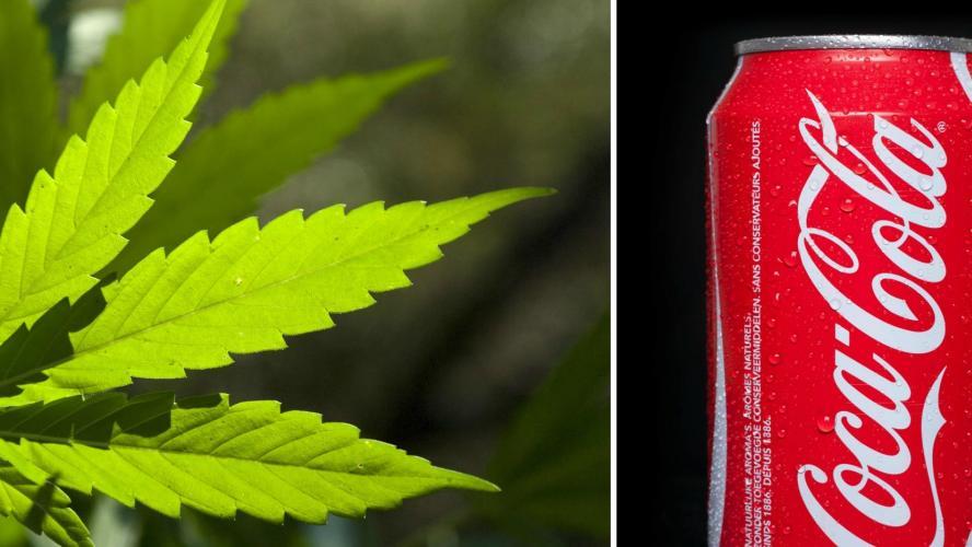 Coca-Cola : bientôt des boissons infusées au cannabis ?