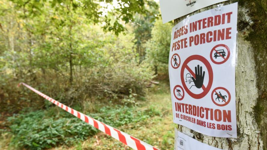 21 communes des Ardennes sortent de la zone d'observation renforcée — Peste porcine