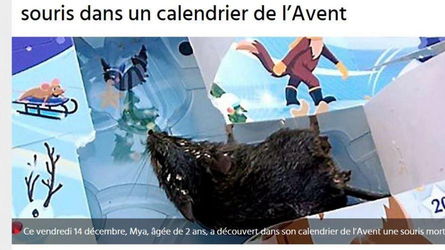 Une souris morte découverte dans un calendrier de l'Avent — Hérault