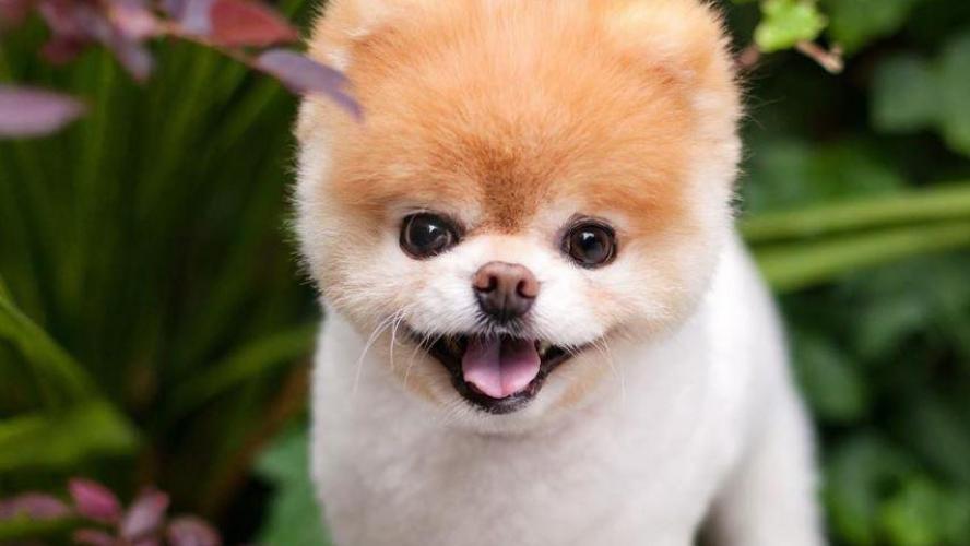 """Résultat de recherche d'images pour """"chien sudinfo"""""""