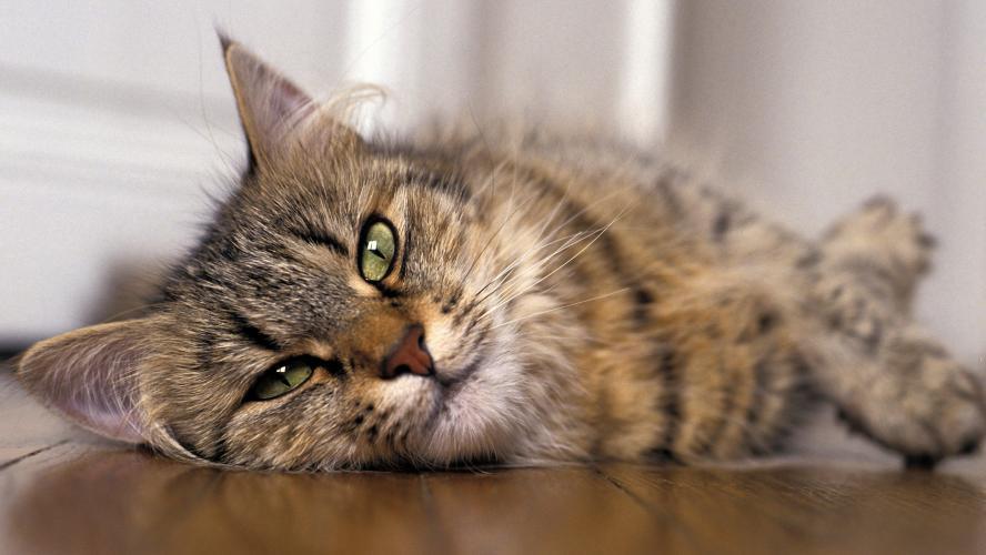 Nord : un chat perdu rentre chez lui en BlaBlaCar