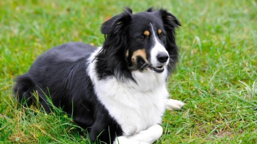 Un chien sauve un enfant de la noyade — Mélisey