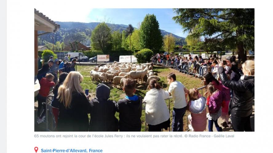 France 15 moutons symboliquement inscrits à l'école pour éviter une fermeture de classe
