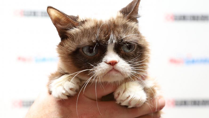 Grumpy Cat, chat boudeur et sensation d'Internet, est décédé
