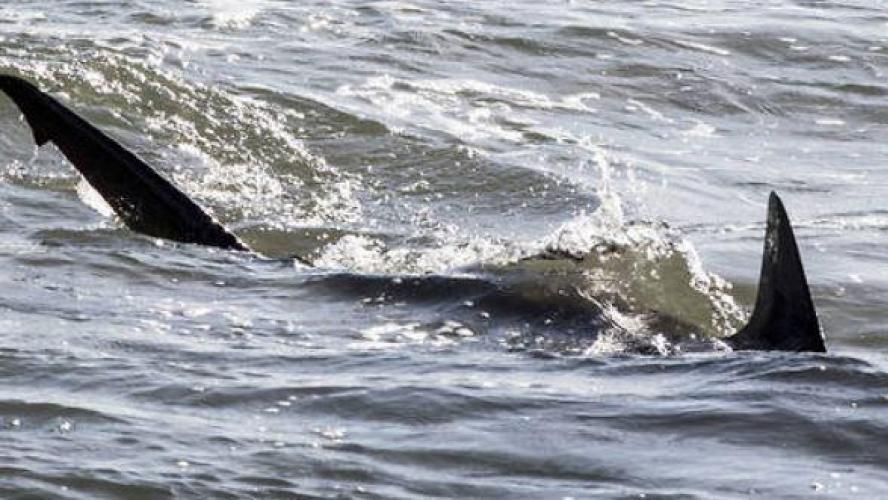 Un enfant grièvement blessé après une attaque de requin — Nouméa
