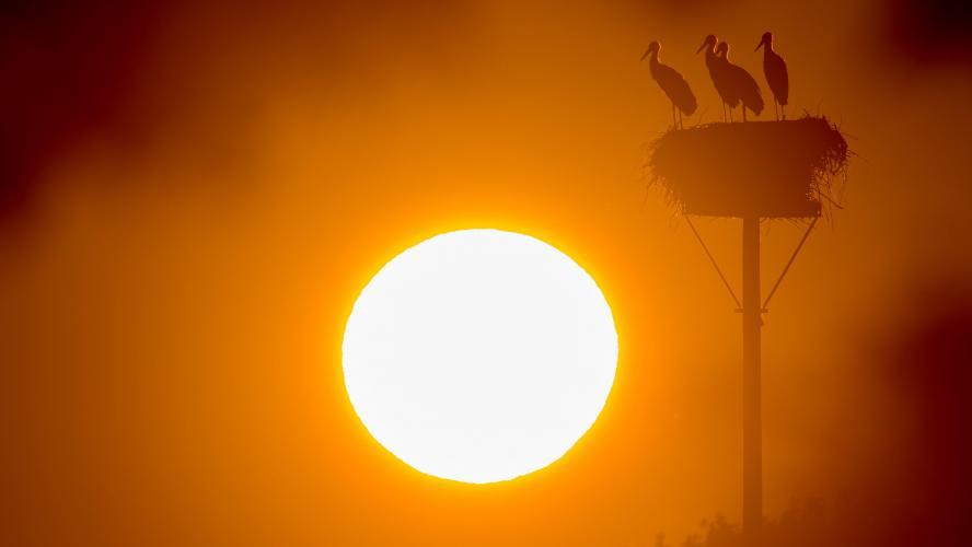 L'Europe explose les records de températures — Vague de chaleur