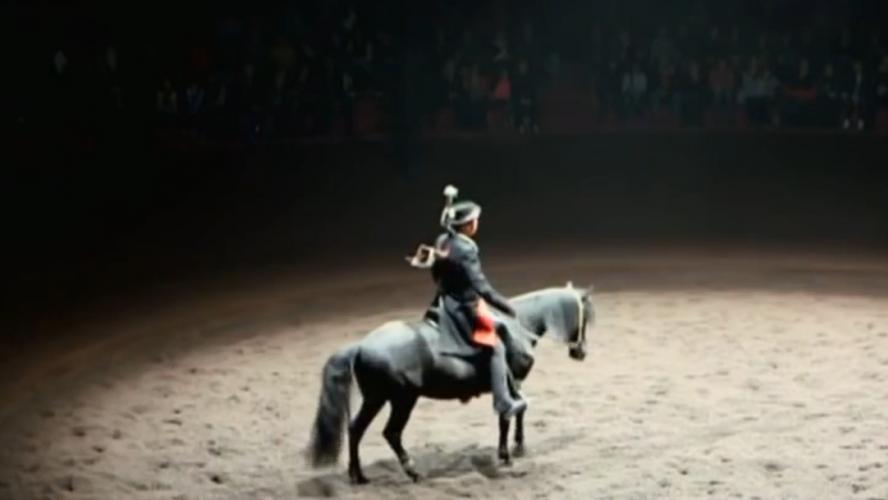 Mort d'un poney après une chute lors d'un spectacle de Zingaro — Bordeaux