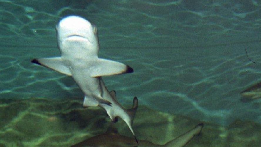 Une touriste française grièvement blessée par un requin — Seychelles