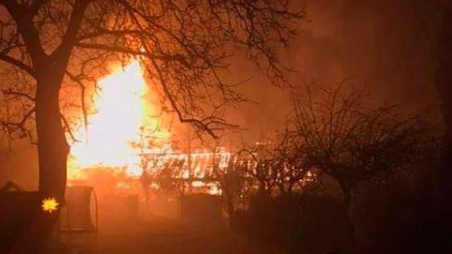 Des dizaines de singes tués dans un incendie
