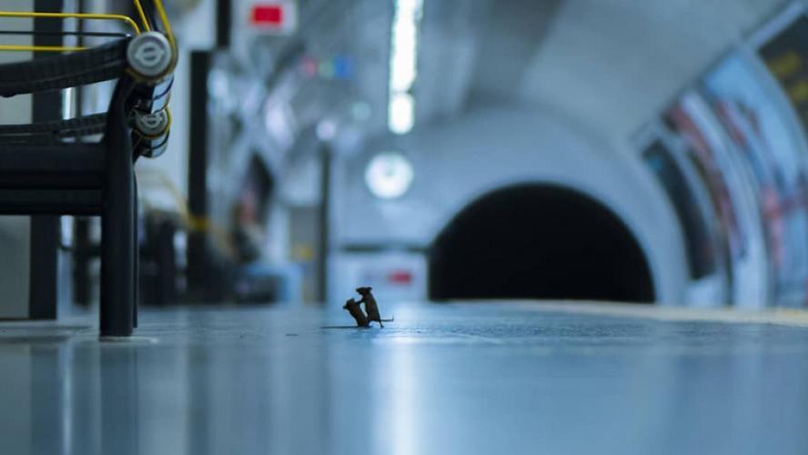 Un combat de souris dans le métro