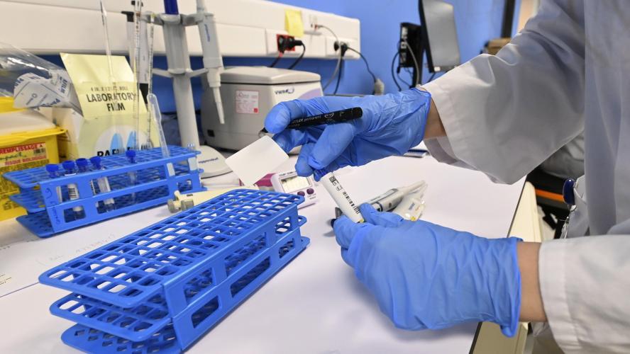 L'hémoglobine d'un ver marin au cœur d'un essai clinique — Coronavirus