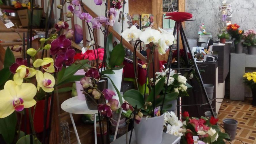 Réouverture des fleuristes à Esneux: la bourgmestre Laura Iker ...