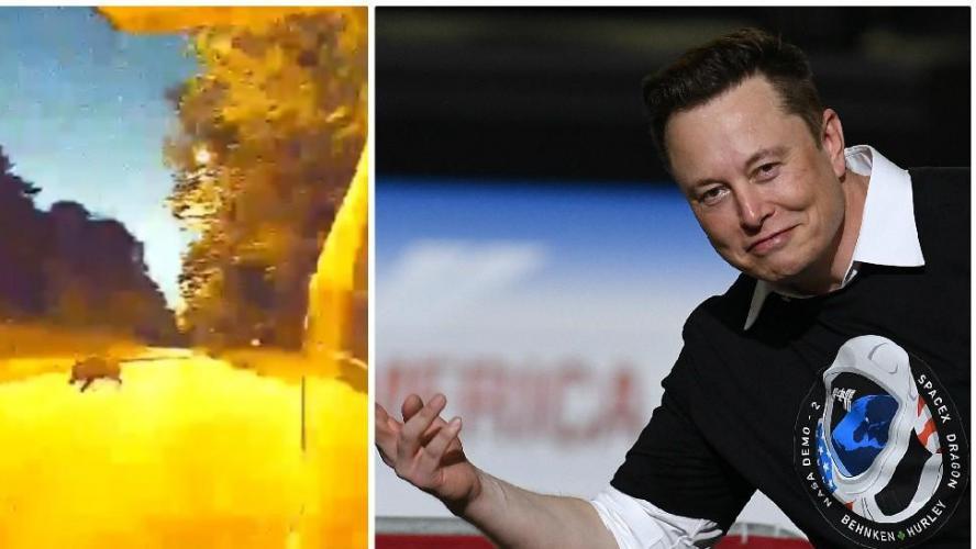 Une Tesla en mode automatique évite un sanglier — Belgique